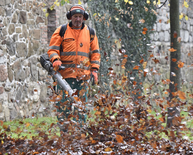Autumn nature cleaning